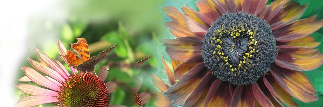 Floristik – Blühende Werkstatt